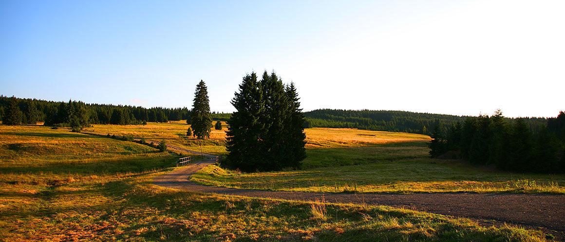 Natur im Erzgebirge